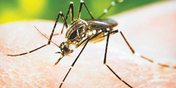 Hit by Dengue? Not to panic!